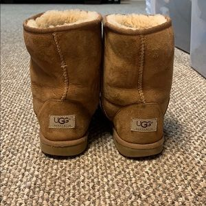 Short Chesnut Uggs